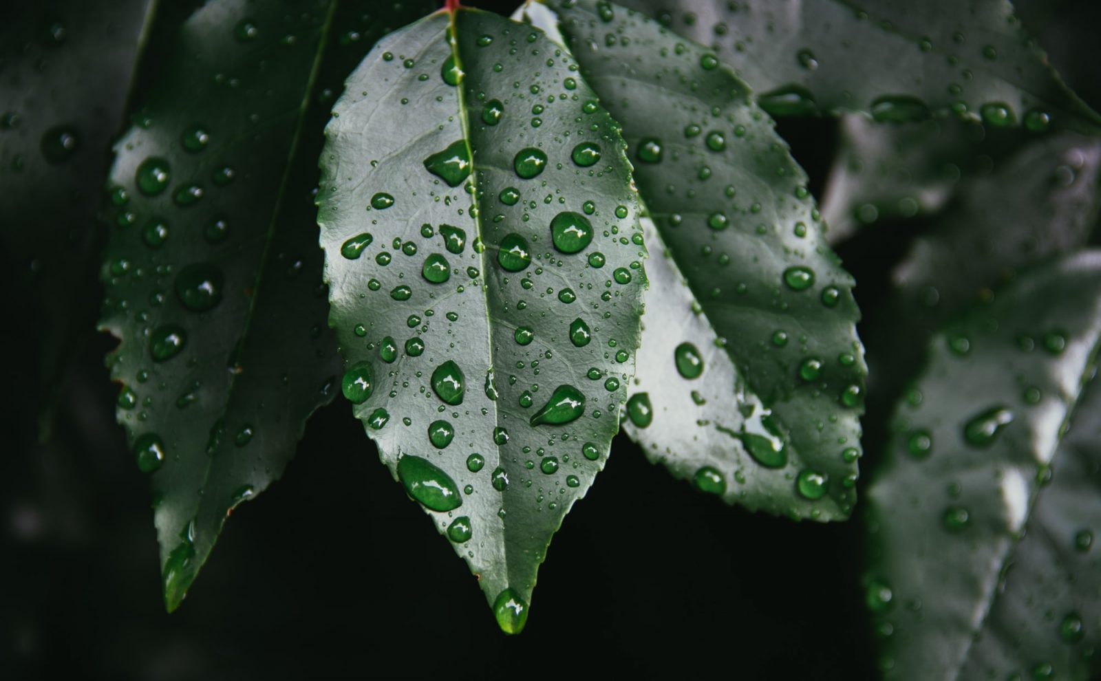 Sateenkastelemia puun lehtiä